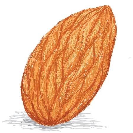 amande: illustration de plan rapproch� d'un �crou d'amande isol� sur fond blanc.