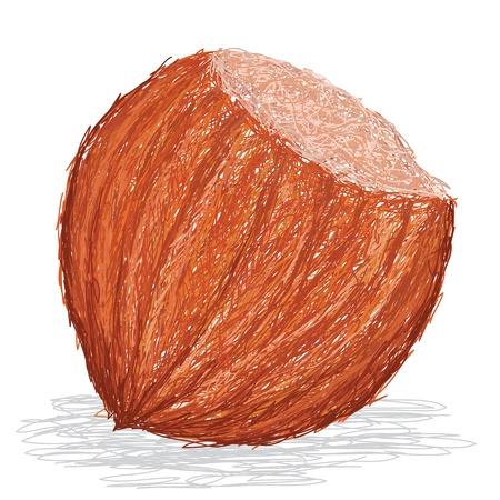 hazelnut: closeup illustration of whole hazelnut isolated in white background.