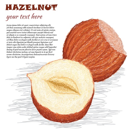 closeup illustration of whole and half hazelnut isolated in white background. Stock Vector - 15194607