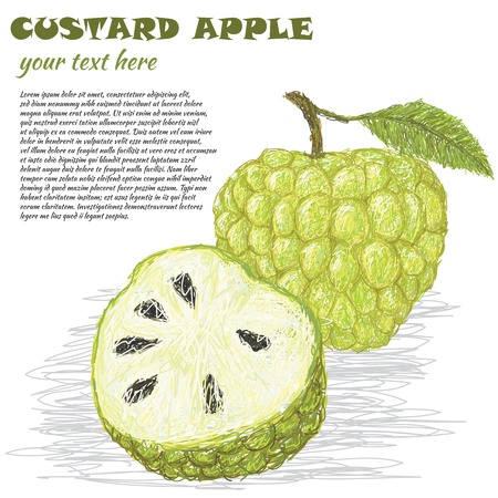 custard apple fruit: closeup illustration of fresh custard apple isolated in white background. Illustration