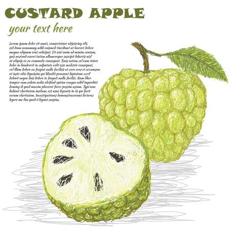 custard: closeup illustration of fresh custard apple isolated in white background. Illustration