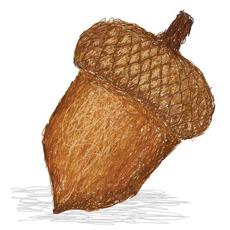 fruit clipart: closeup illustration of acorn nut.