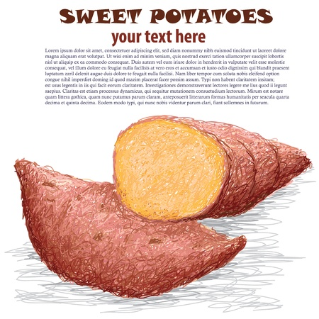 closeup illustration of sweet potatoes isolated in white background. Vector
