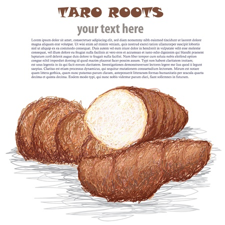 starch: closeup illustration of group of taro roots isolated in white background.