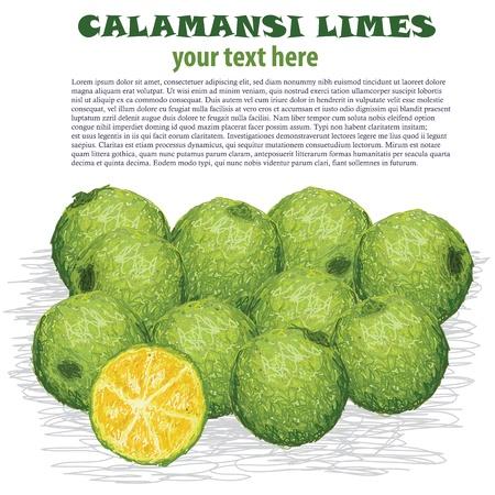 condimentos: Primer ejemplo de limones frescos calamansi aislados en fondo blanco