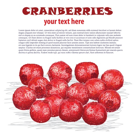 cowberry: closeup illustration of group of cranberries isolated in white background Illustration