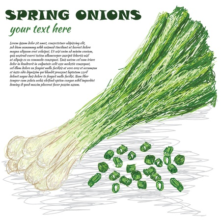 spring onions: closeup illustraion of fresh spring onions isolated in white background
