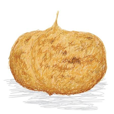 closeup illustration of jicama root isolated if white background