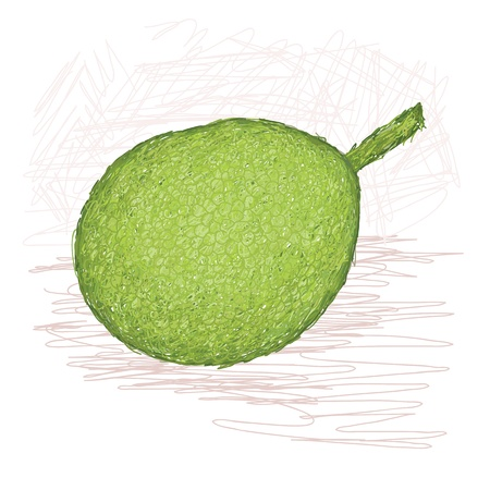 known: illustration of whole breadfruit smooth-skinned variety with scientific name Artocarpus altilis, originated in Federal State of Micronesia, locally known as Meisaip