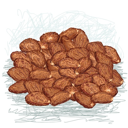 unpeeled: closeup illustration of heap of cacao beans    Illustration