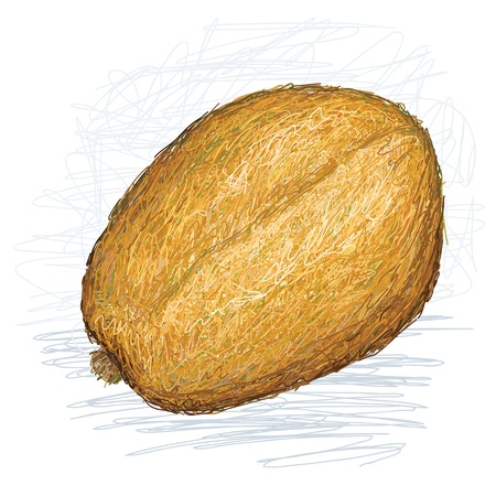 golden apple: illustration of fresh golden apple tropical fruit with scientific name spondias dulcis
