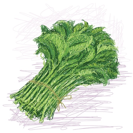 leafy: illustration of fresh bunch of raw kangkong vegetable with scientific name Ipomoea aquatica   Illustration