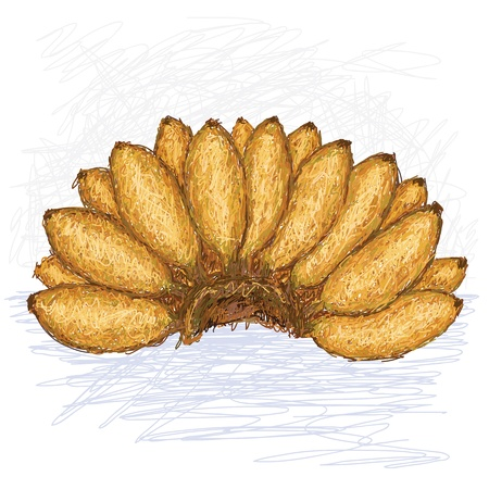 musa: illustration of bunch of small bananas with scientific name musa acuminata