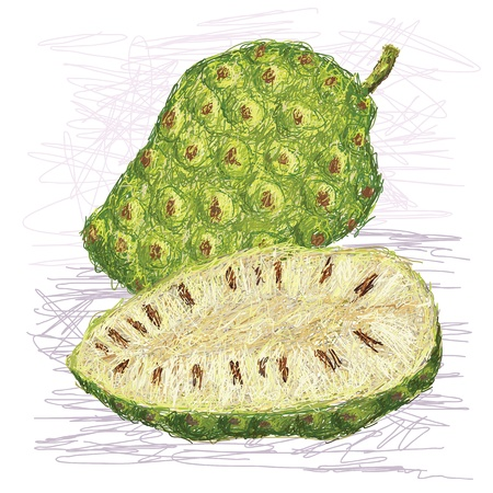 edible: illustration of fresh noni fruit cross-section isolated in white background