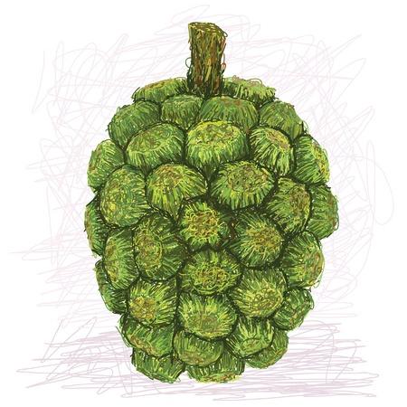 subtropical: closeup illustration of pandanus fruit isolated in white background    Illustration