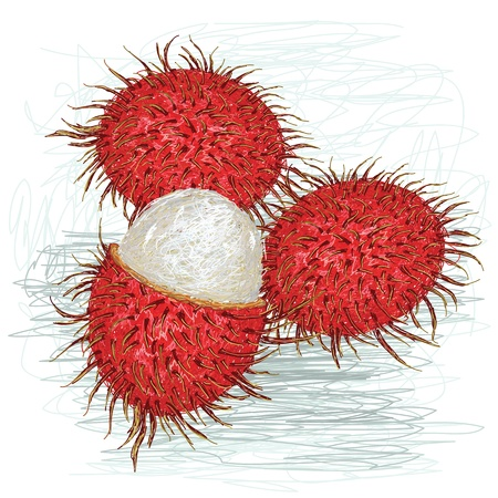 lychee: closeup illustration of a fresh ripe rambutan fruit    Illustration