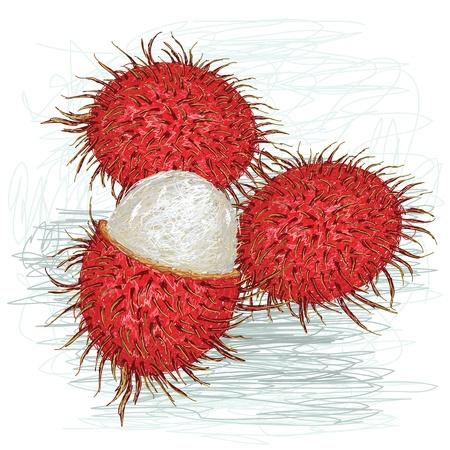 rambutan: closeup illustration of a fresh ripe rambutan fruit    Illustration