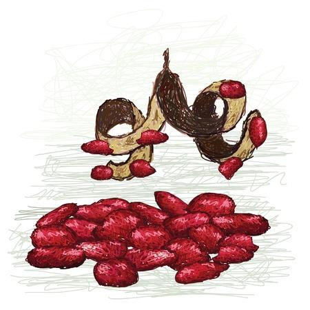 sandalwood: illustration of pile of red beads with pod  scientific name - Adenanthera pavonina    Illustration