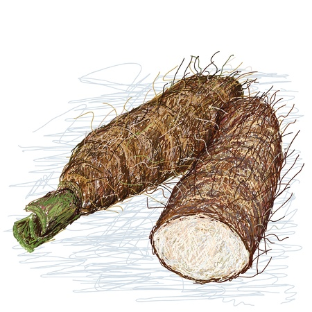 taro: closeup illustration of alocasia taro roots, tuber with cross section isolated in white background  Illustration