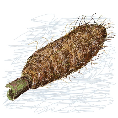 taro: closeup illustration of alocasia taro roots, tuber isolated in white background  Illustration