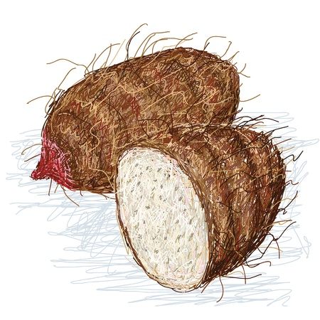 starchy food: closeup illustration of xanthosoma taro roots, tuber with cross section isolated in white background  Illustration