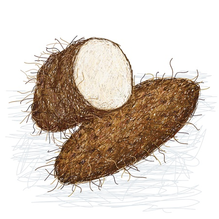 starchy food: illustration of yam crops, tuber vegetable with cross section isolated in white background.