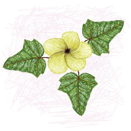 belle: illustration of edible lagikway leaves and flower  Scientific name abelmoschus manihot    Illustration