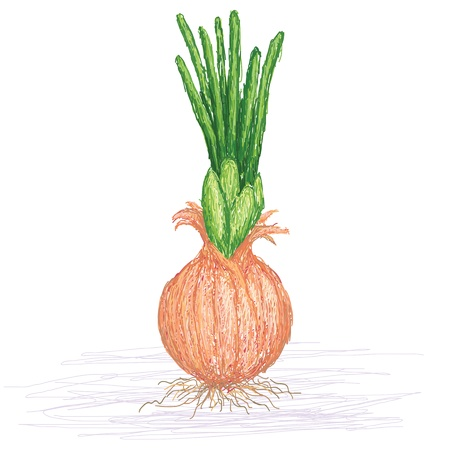 chive: unique style illustration of chive  Scientific name Allium schoenoprasum, isolated in white background