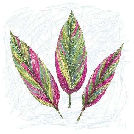 cordyline: unique style illustration of Ti plant leaf  Scientific name Cordyline fruticosa isolated in white background