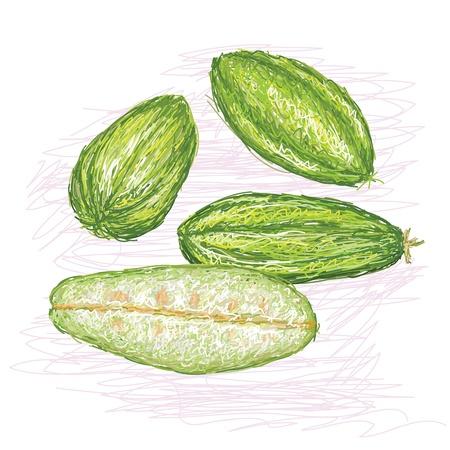 bilimbi: unique style illustration of Tree sorrel  Scientific name Averrhoa bilimbi isolated in white background
