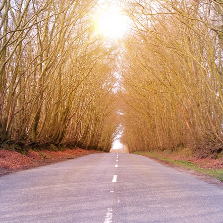 somerset: A road in Somerset  Stock Photo