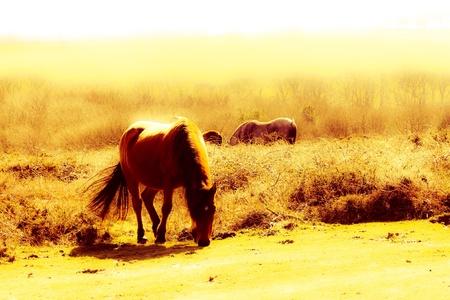 quantock hills: Wild horses of the quantocks