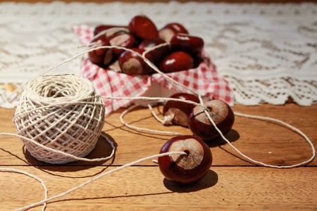 conkers: Preparing for a game of conkers