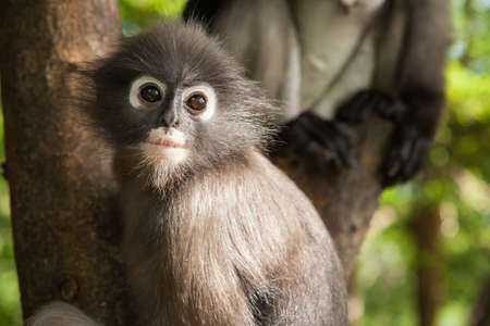 preety: preety macaque at Prachuap Khiri Khan ,Thailand Stock Photo