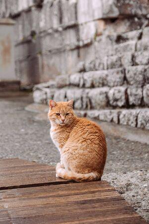 Cat Travel at The Library of Celus in Ephesus, Izmir, Turkey