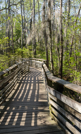 Wooden walkway over the swamp in First Landing State Park. Located in Virginia Beach, Va.