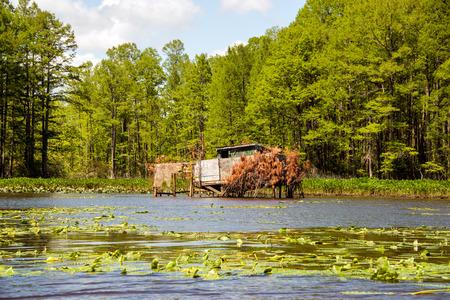 pato: Un pato ciego en el r�o Chickahominy, justo al oeste de Williamsburg, Virginia.