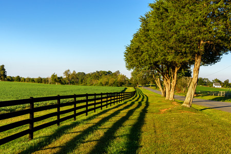 fence: A beautiful country road showing a field of soybeans, wooden fence and a nice defined shadow of the fence. Just before sunset Stock Photo