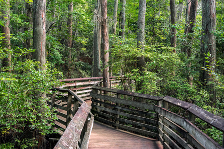 first: A boardwalk on the Bald Cypress path in First Landing state park, Virginia Beach, Va, Stock Photo
