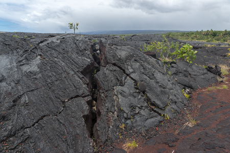 lava field: A large lava field on the big island of Hawaii on its eastern side of the island. New plant growth is beginning to poke its way through the lava. Stock Photo