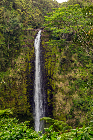 caida libre: Akaka falls has a free-fall plunge of 420 feet. Located north of Hilo on Hawaiis big isalnd