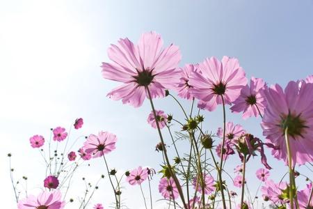 아름다운 날에 꽃 핑크 꽃