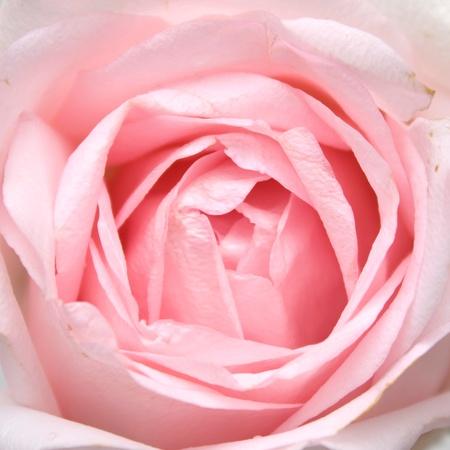 꽃 배경을 닫습니다.