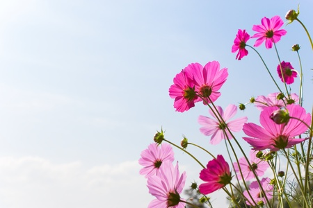 Blossom pink flower in a beautiful day Stok Fotoğraf - 9368112