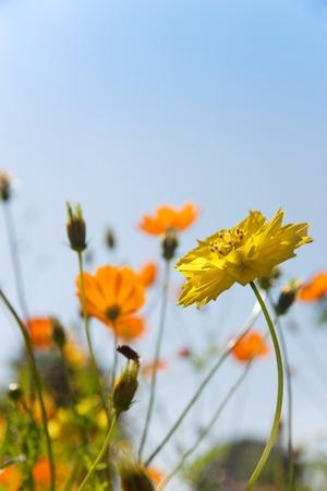 아름다운 날에 꽃 필드