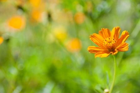 아름다운 날의 꽃밭 스톡 콘텐츠