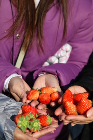 Strawberry on a hand photo