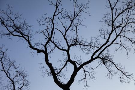 Tree branch in winter morning