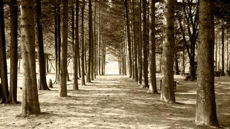나무 터널 스톡 콘텐츠