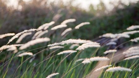 잔디 꽃밭